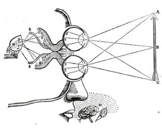 """Un """"ojo biónico"""" permite a seis ciegos recobrar parcialmente la visión"""