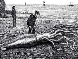 Los científicos descongelan un calamar gigante para diseccionarlo