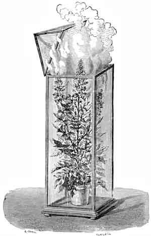 Germinó una semilla de 2.000 años de antigüedad